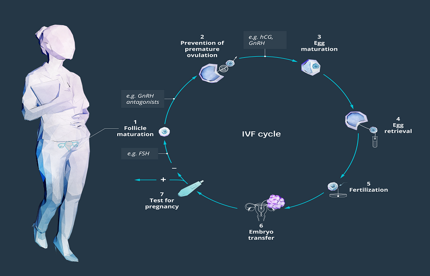 Infertility_IVf-cycle